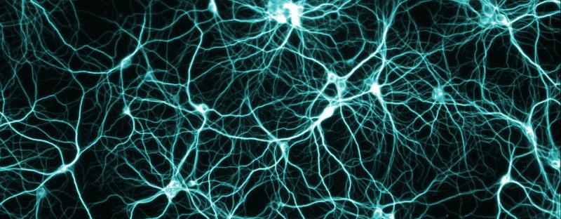 Brain neural pathways